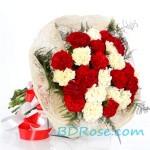 Glaring Carnations