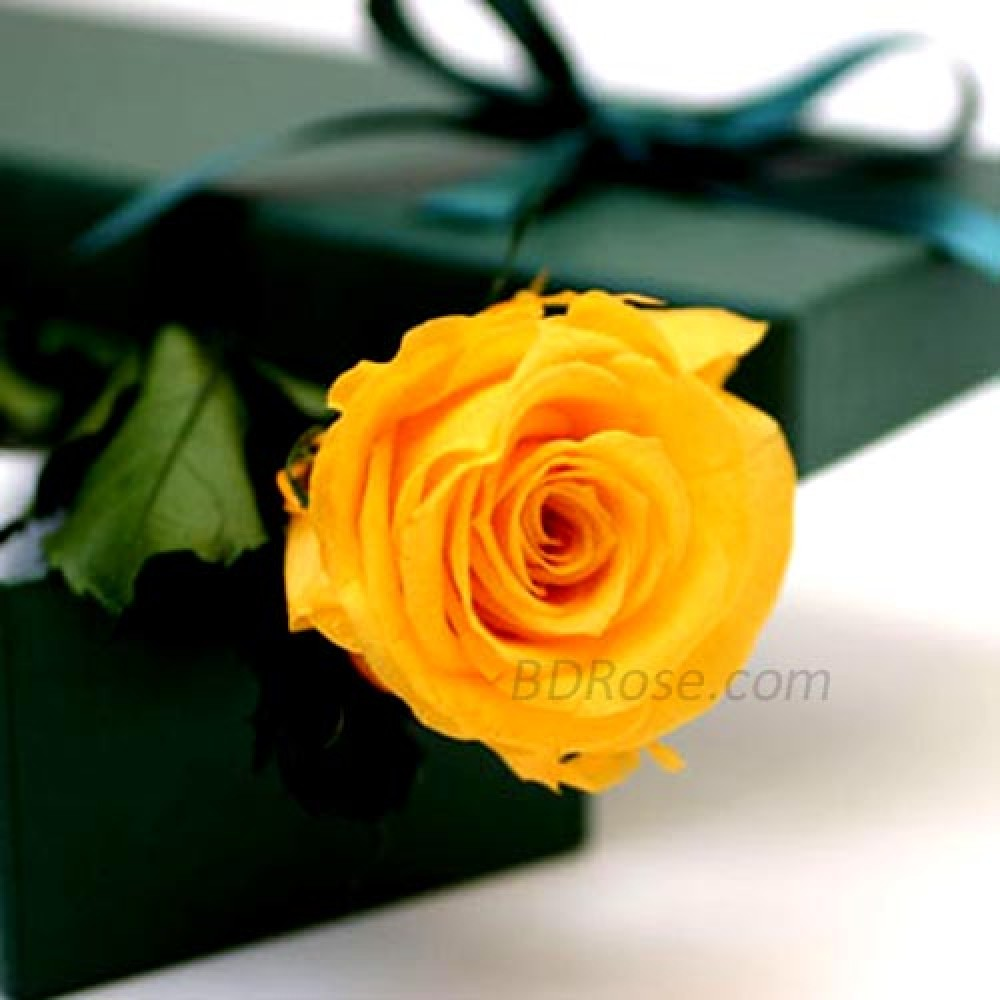 Imported single yellow rose in a box mightylinksfo
