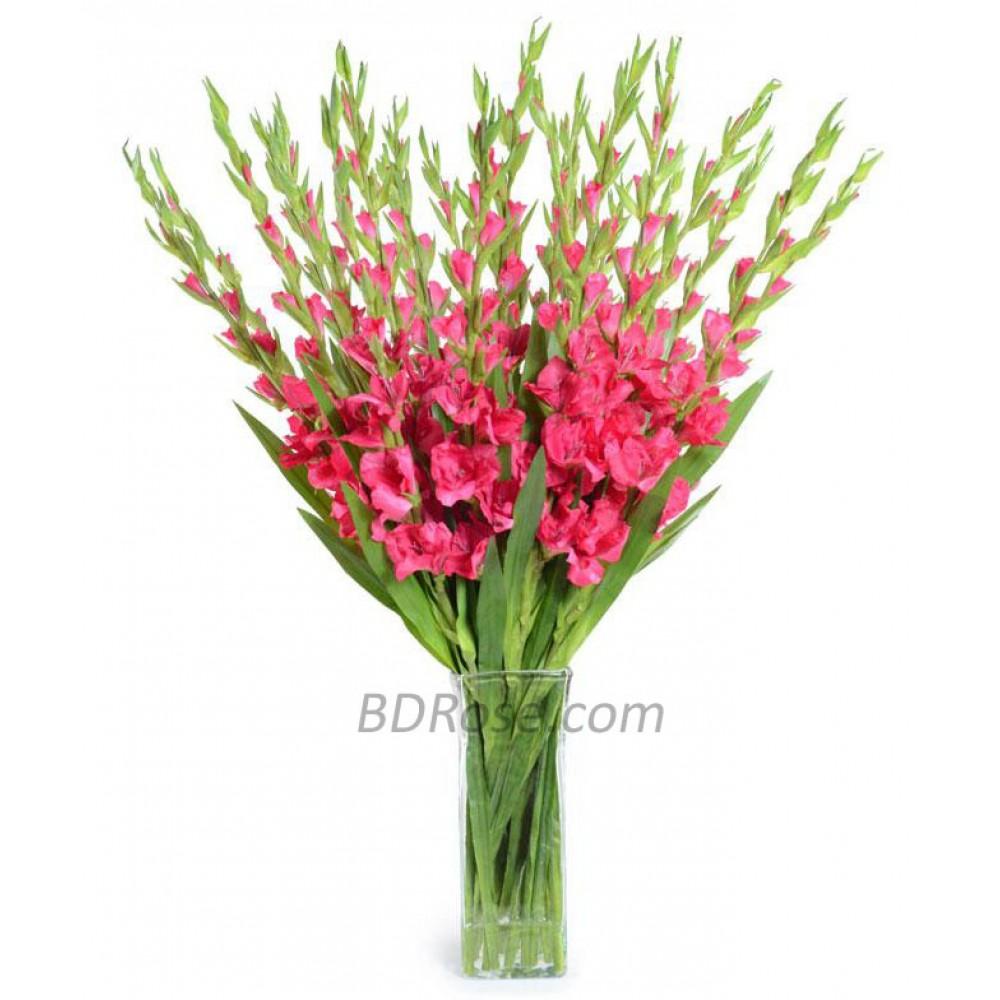 1 Dozen Gladiolus in vase