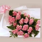 Shiny Carnations
