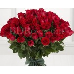 70 pcs red roses in bouquet